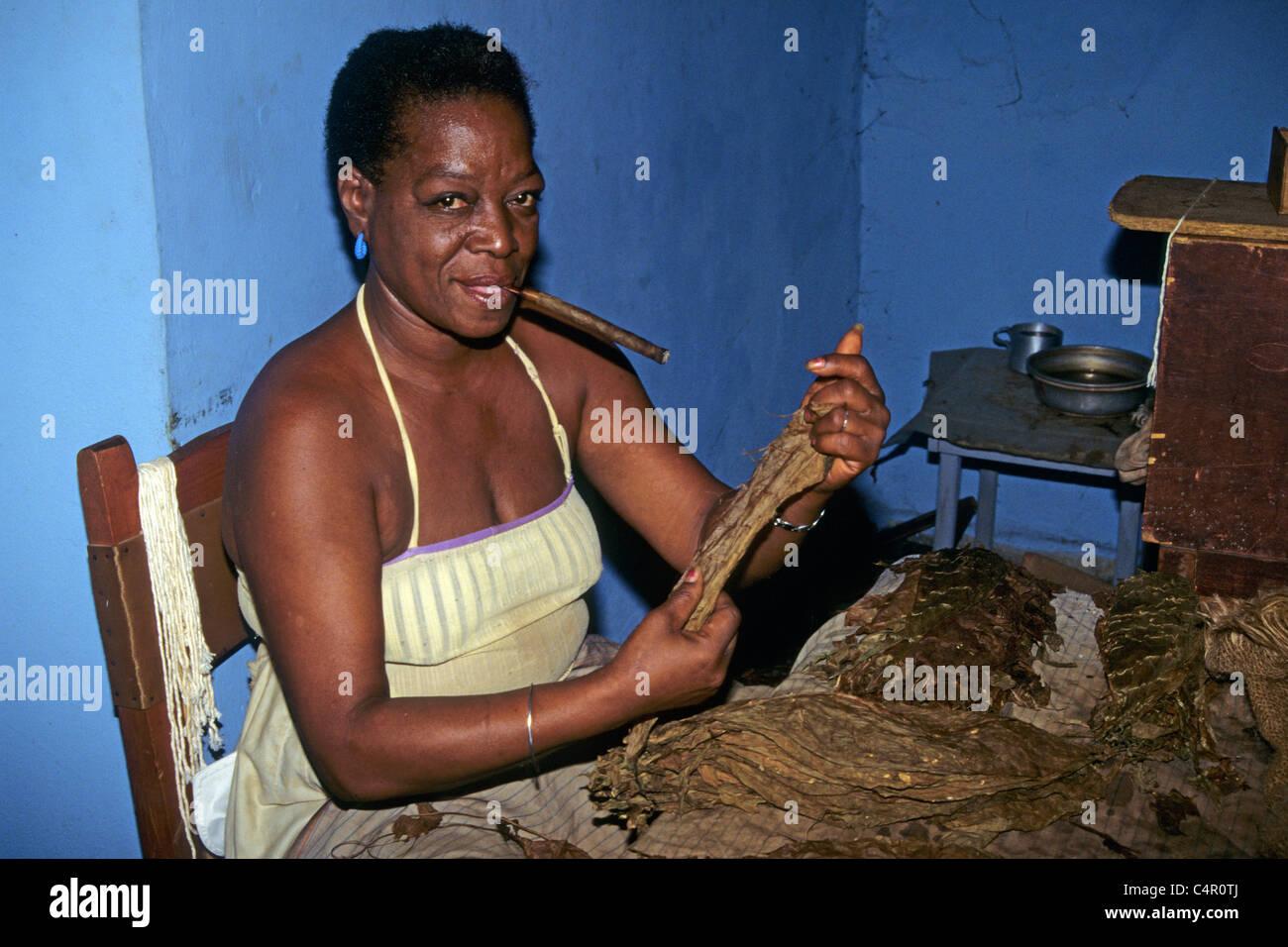 Tabakfabrik kubanerin ferigt Comiczeichners Zigarren, Tabak Fabrik Kubanerin Herstellung kubanischen Zigarren Stockbild