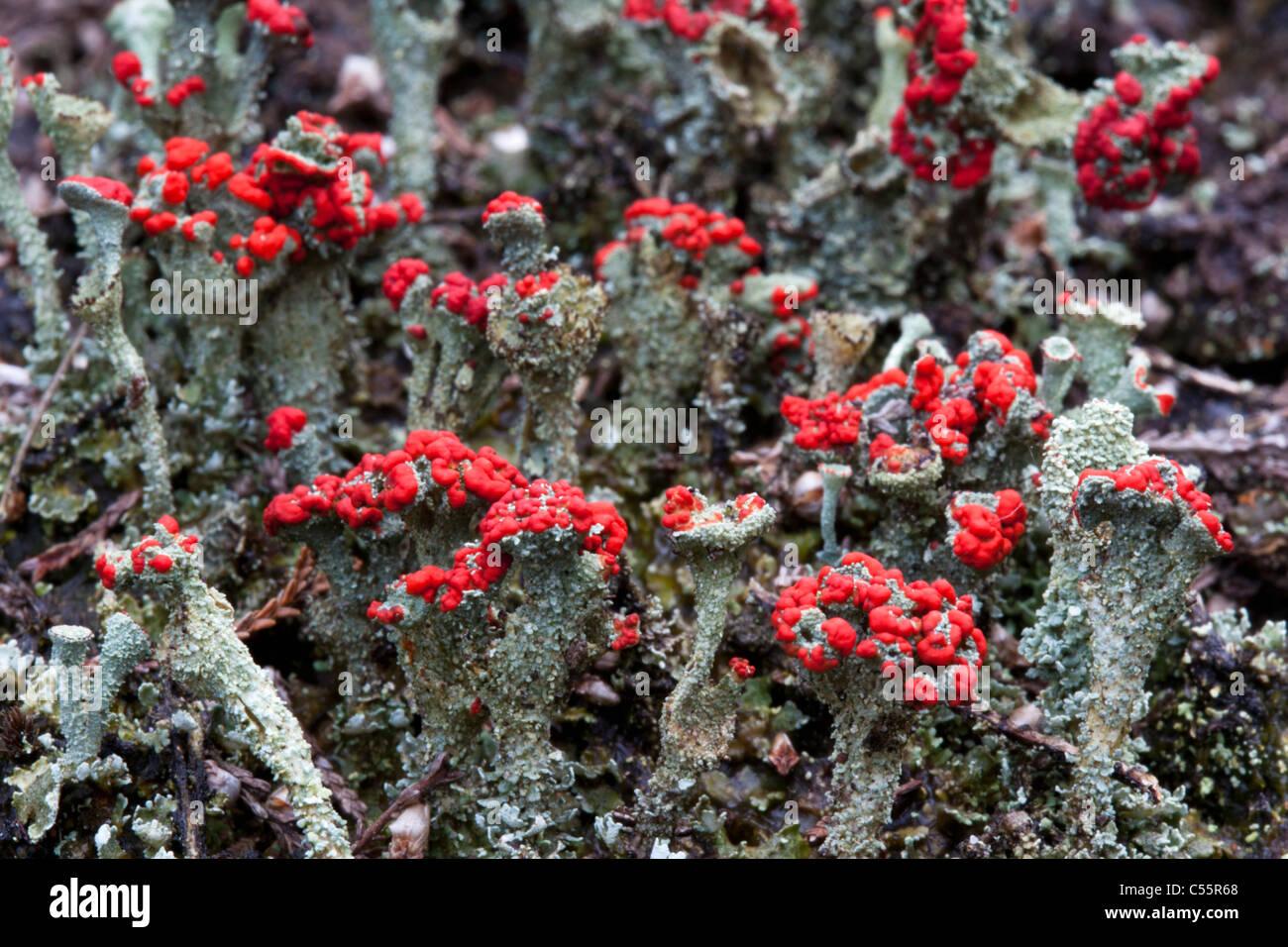 Den Niederlanden, Loon Op Zand, Nationalpark De Loonse En Drunense Duinen. Typische Pflanzen. Stockbild