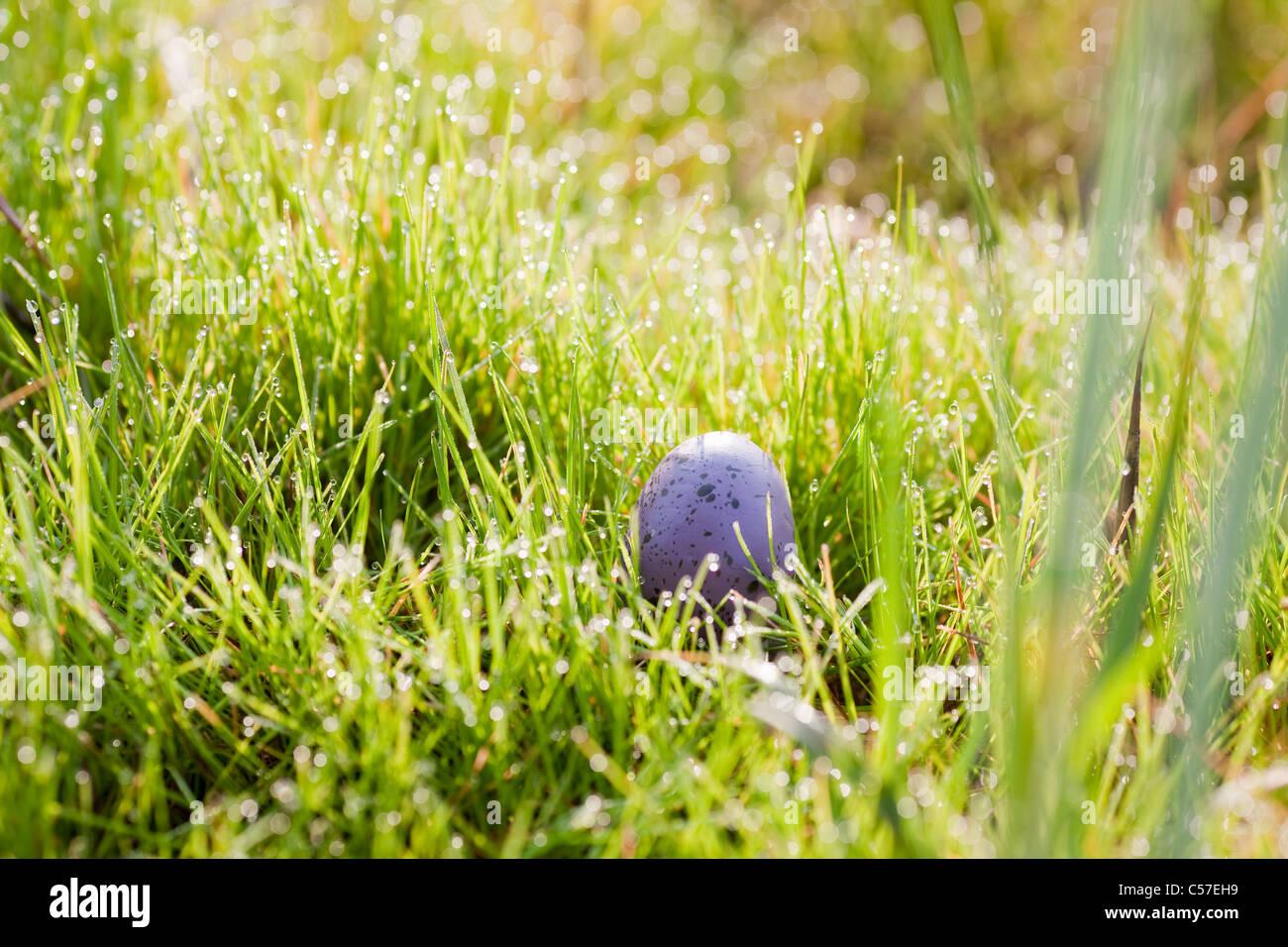 Ei lange Gras versteckt Stockbild