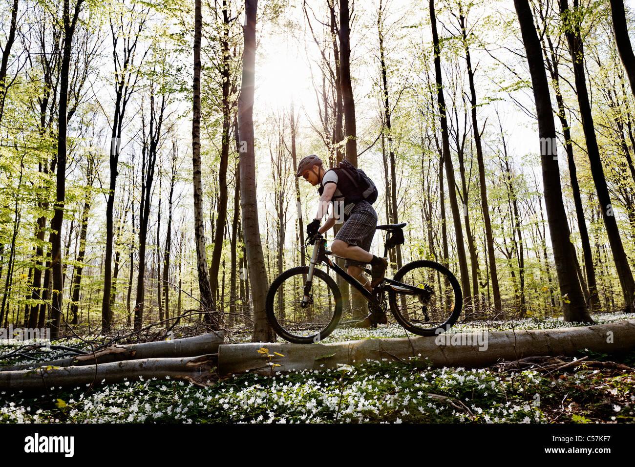 Mountainbiker auf umgestürzten Baum Stockbild