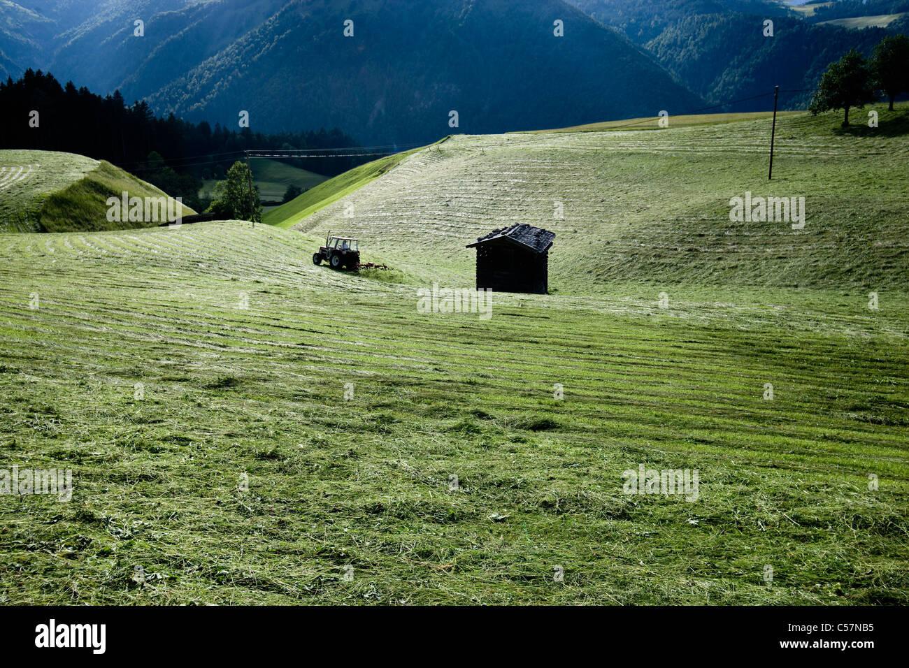 Hütte im ländlichen Getreidefelder Stockbild