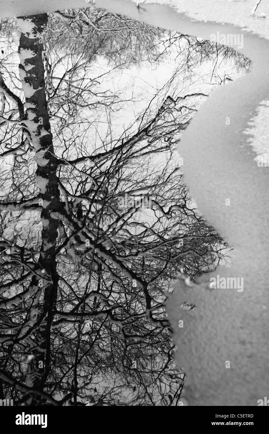 Reflexion eines kahlen Baumes auf ein gefrorenes Wasserpfütze Stockbild