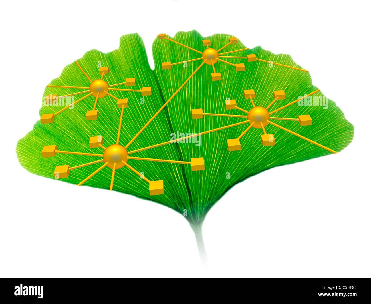 Ginkgo-Netzwerk-Diagramm Stockbild