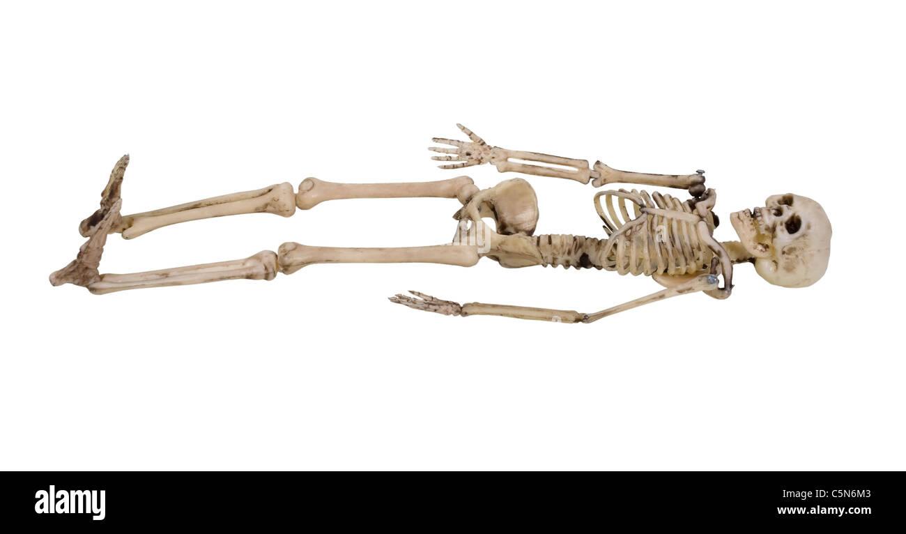 Das Skelett ist der interne Rahmen des Körpers - Pfad enthalten Stockbild