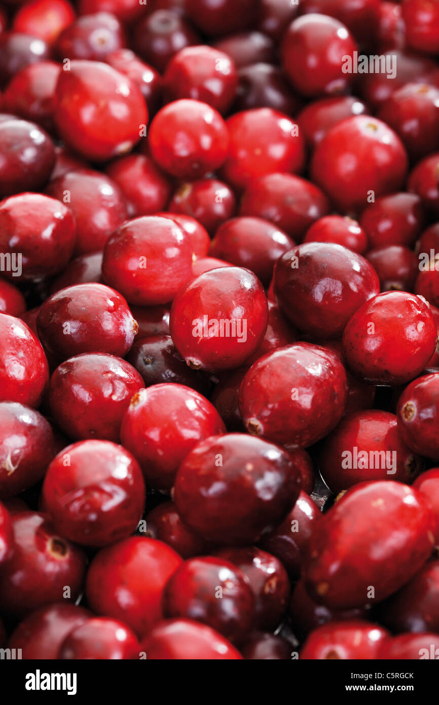 Cranberries (Vaccinium Macrocarpon), full-frame Stockbild