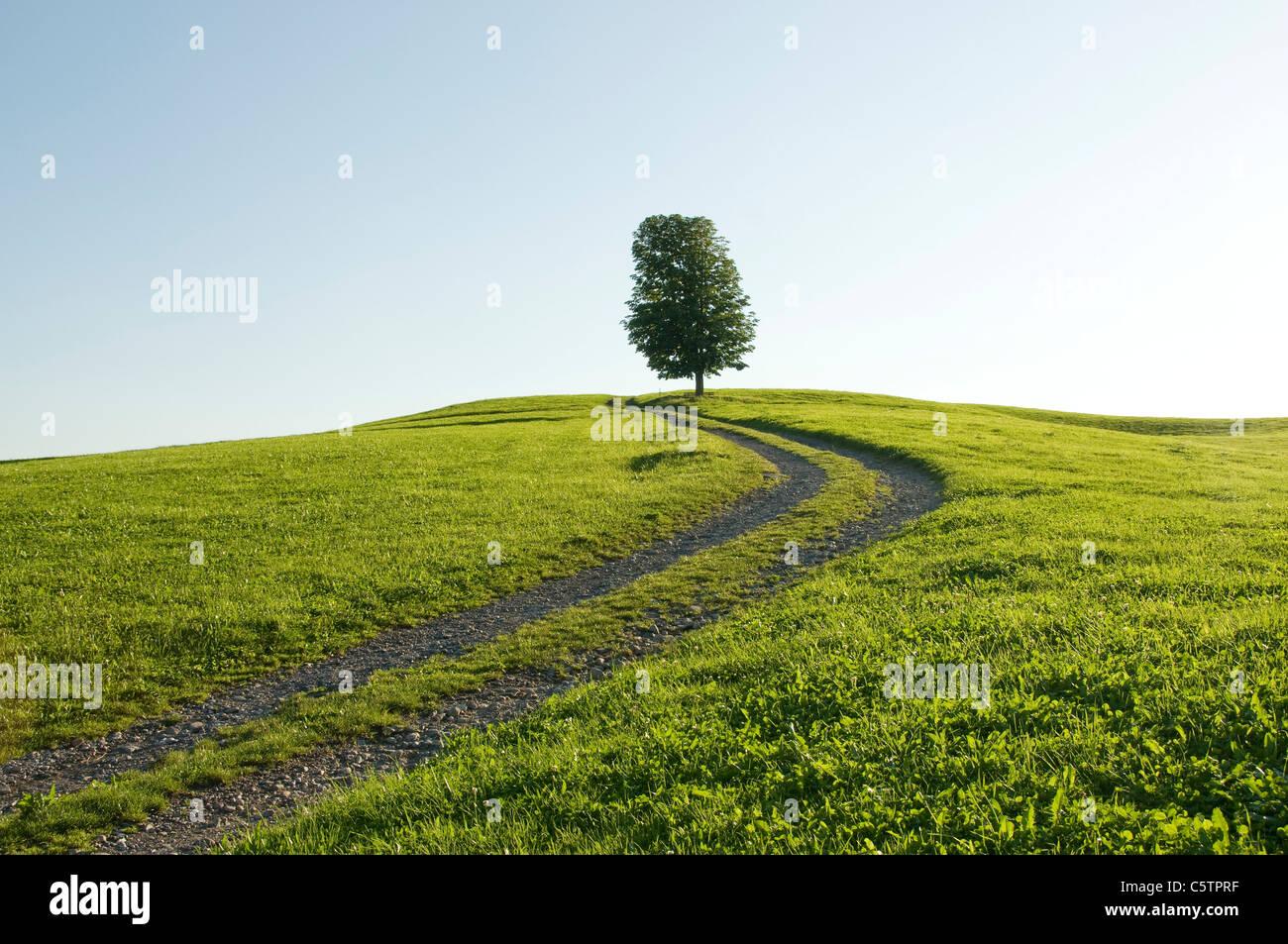 Deutschland, Bayern, Allgäu, einziger Baum neben Feldweg Stockbild