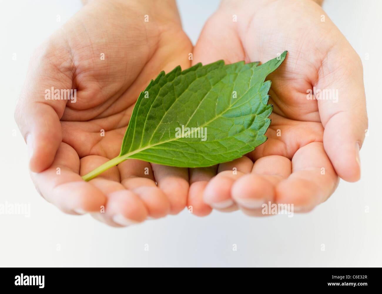 Hand halten Blatt Stockbild