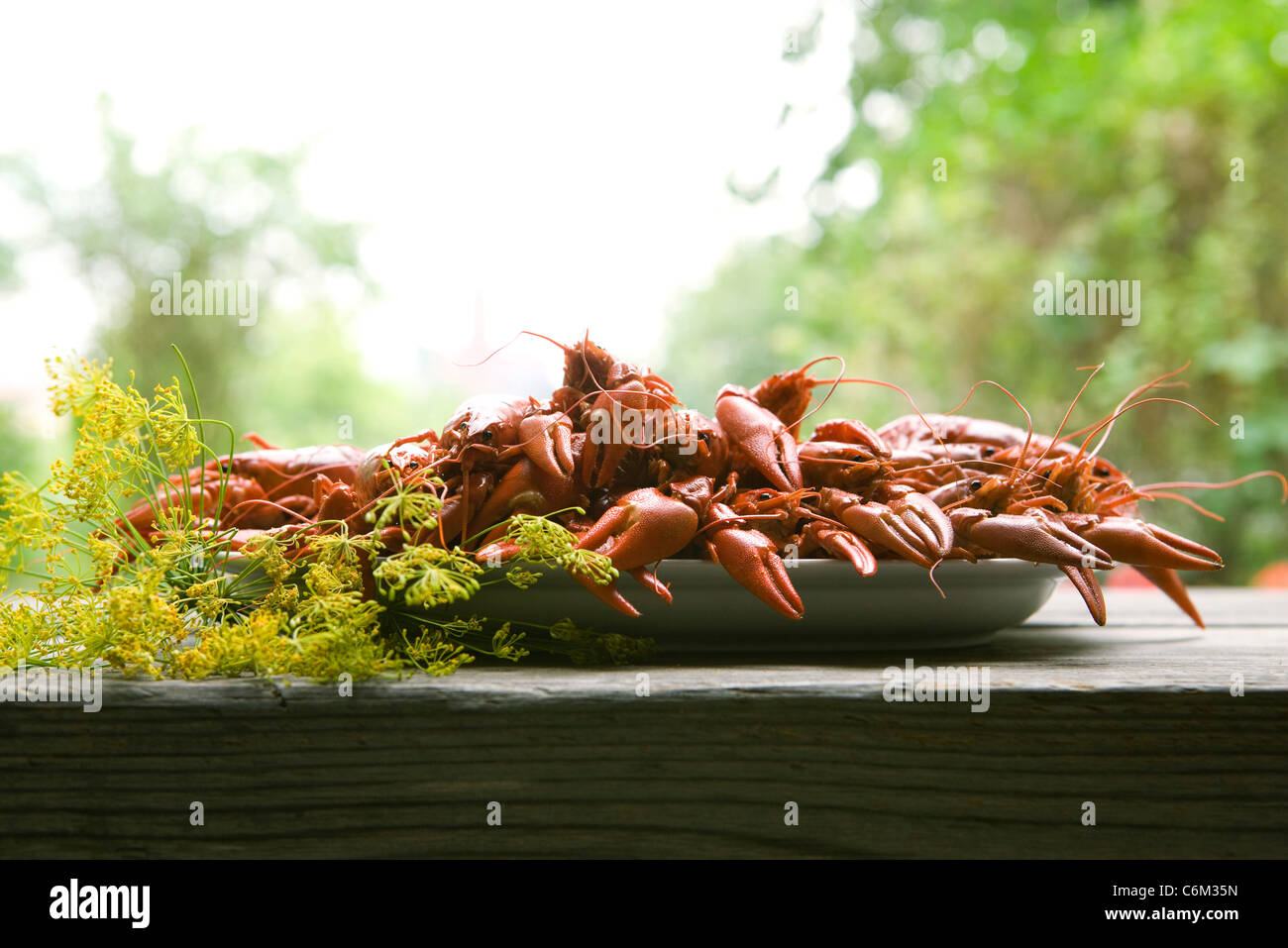 Gekochte Krebse auf Gartentisch Stockbild