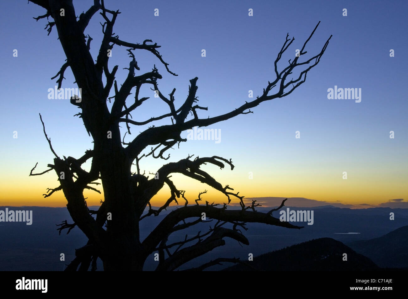 Eine Silhouette eines Baumes bei Sonnenaufgang im Great Basin National Park, NV. Stockbild