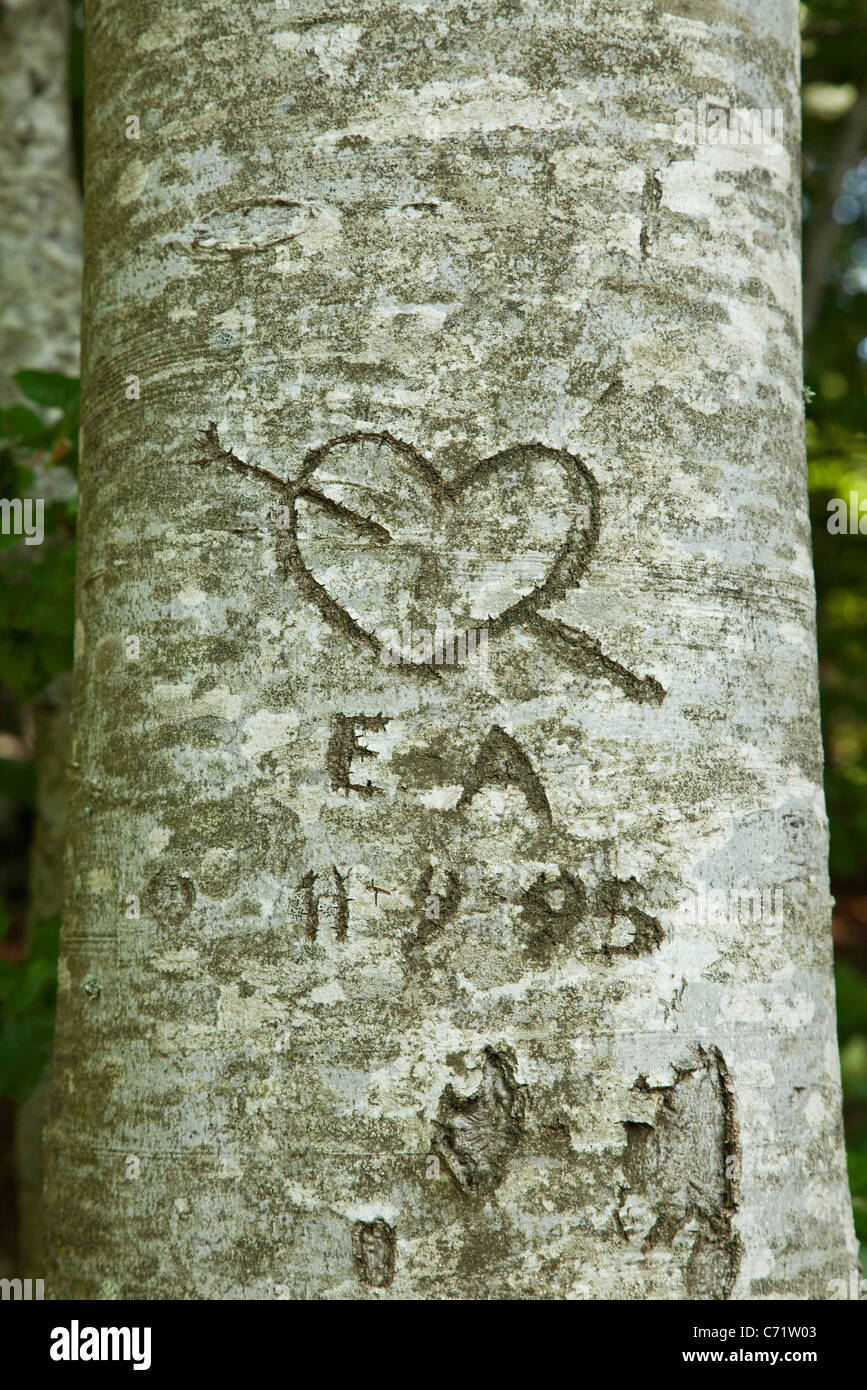 Liebe Herz auf Baum geschnitzt Stockbild
