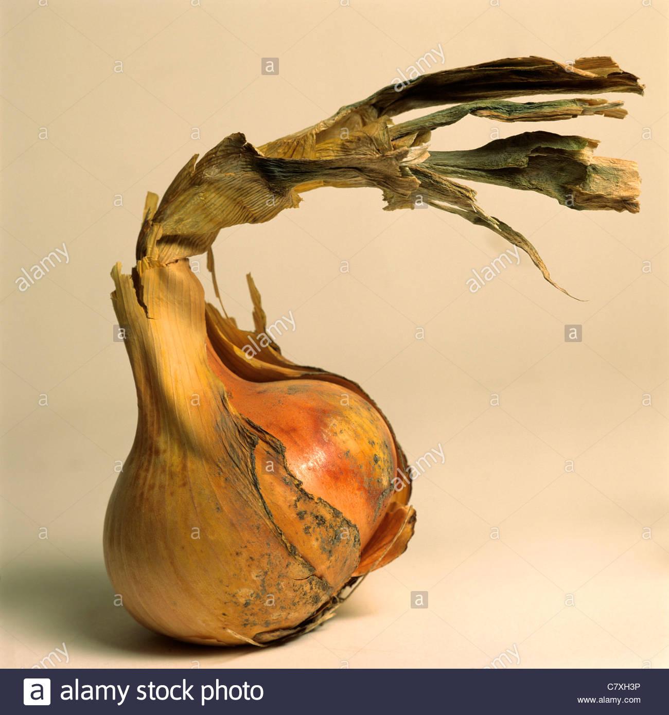 Zwiebel mit peeling Haut Stockbild