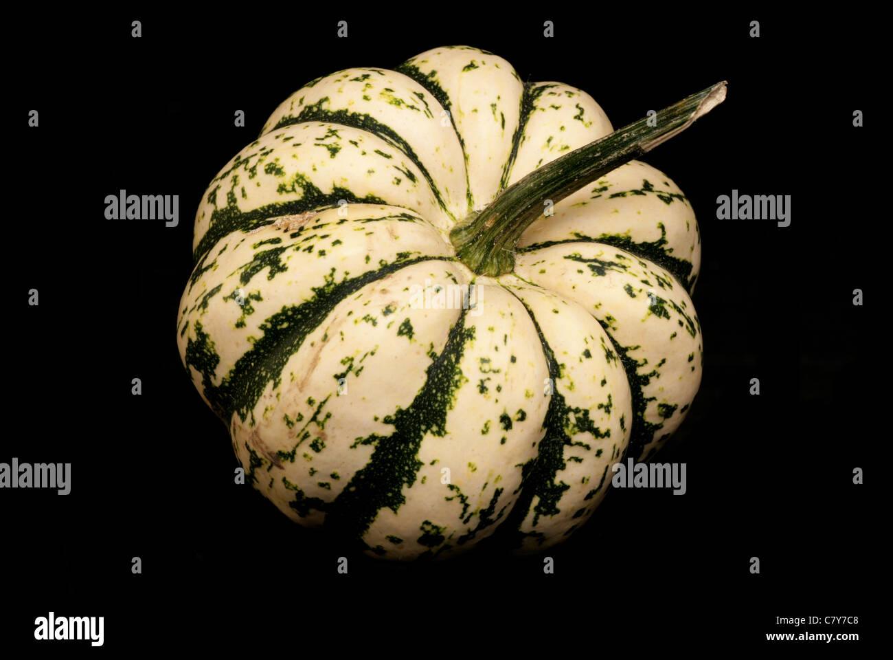 Harlequin Squash auf schwarzem Hintergrund Stockbild