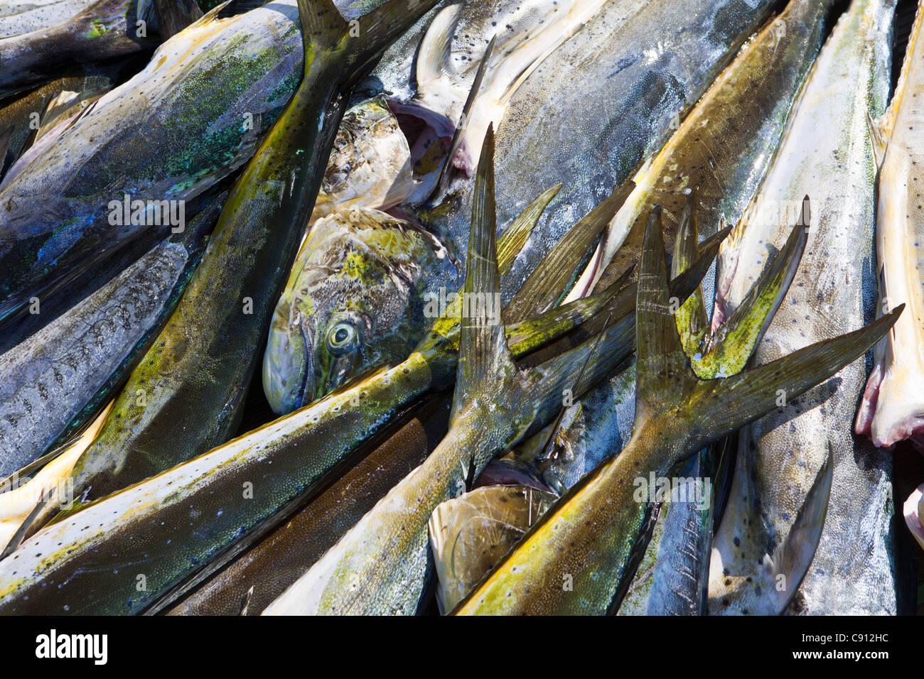 Die Niederlande, Insel Bonaire, Niederländische Karibik, Kralendijk, Meer-Fisch Restaurant. Stockbild