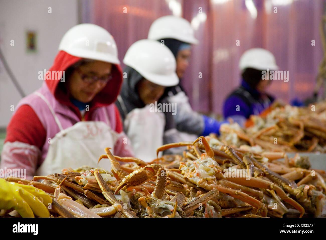 Konservenfabrik Arbeiter Prozess Tanner Krabben auf dem Slime-Line auf Kodiak, Südwesten, Alaska, Alaska frische Stockbild
