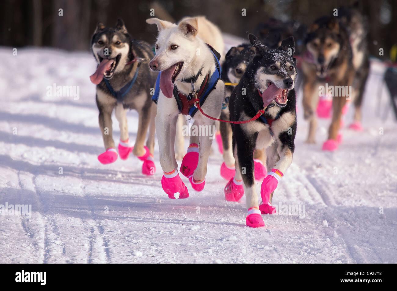 Newton Marshall Lead Hunde laufen während der 2011 Iditarod zeremonielle Start in Anchorage, Alaska Yunan, Stockbild