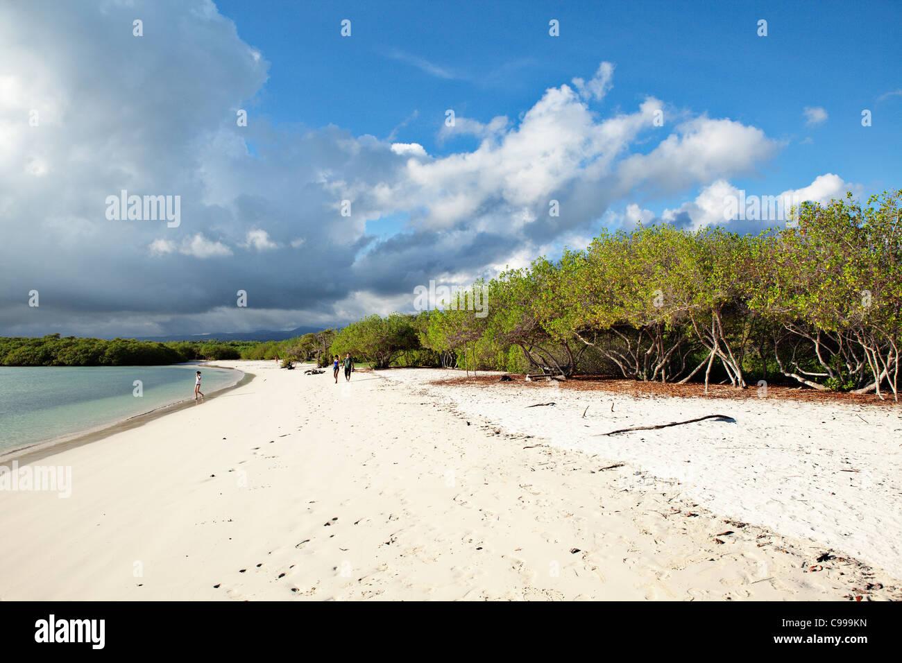 Tortuga Beach auf der Insel Santa Cruz, Galapagos, Ecuador. Stockbild