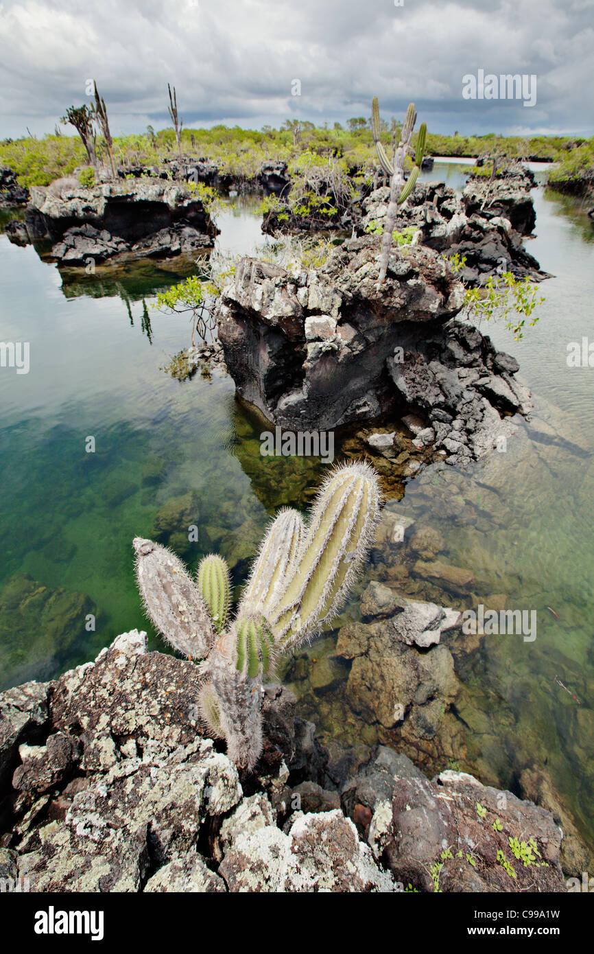 Los Tuneles-Insel / Schnorcheln in der Nähe von Isabela Island, Galapagos, Ecuador. Stockbild