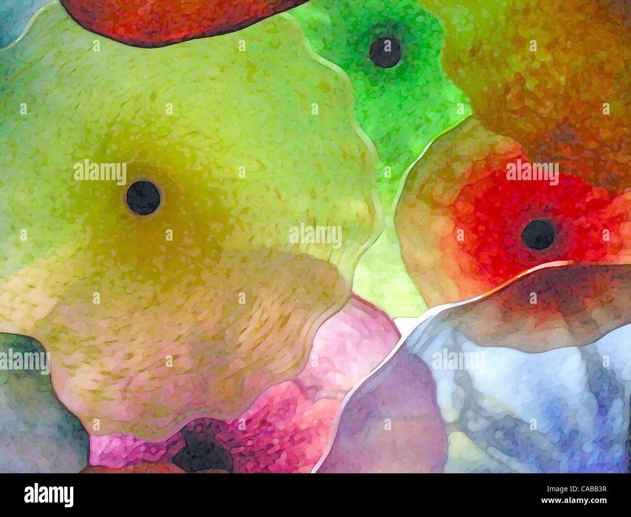 3. Juni 2004; Los Angeles, Kalifornien, USA; Abstrakte Glasblumen. Stockbild