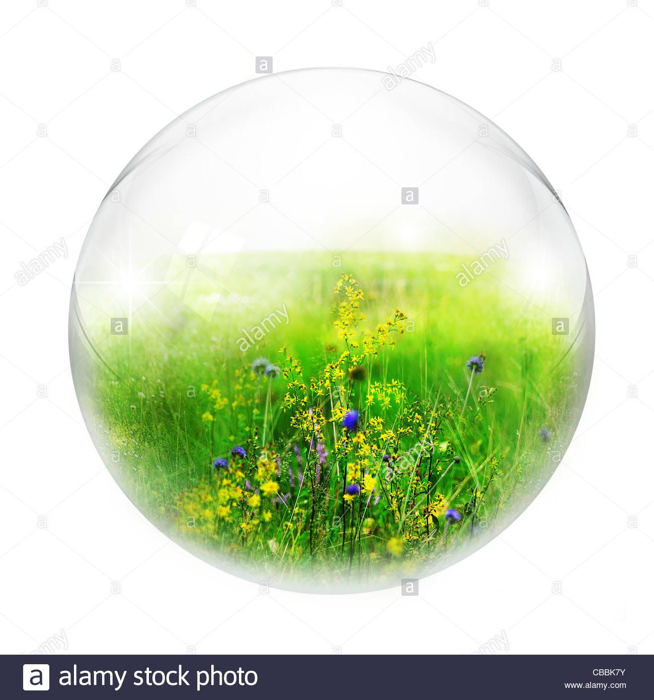Wiese in Blase Stockbild