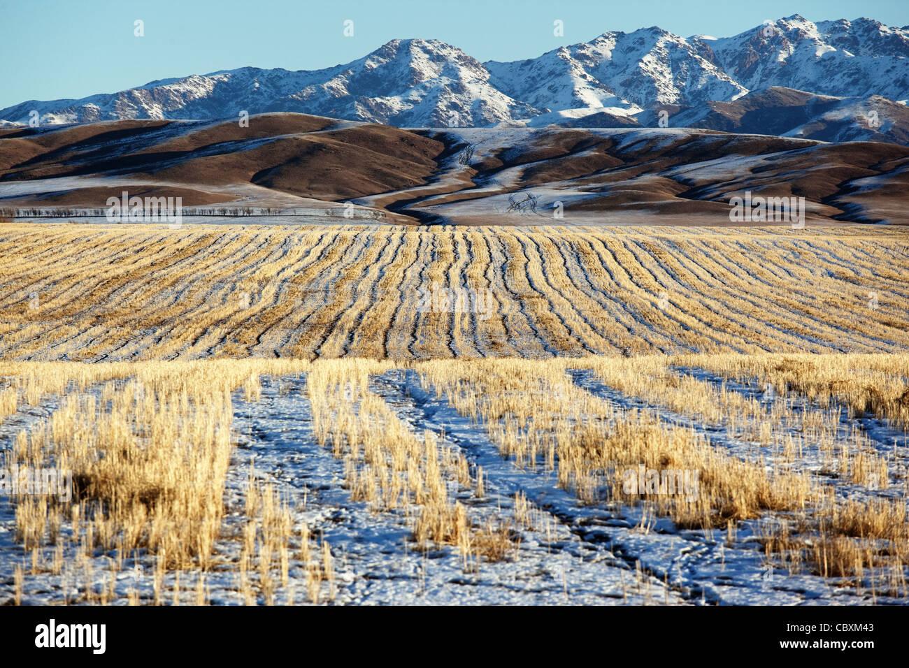 Erster Schnee auf den Feldern und Bergen Stockbild