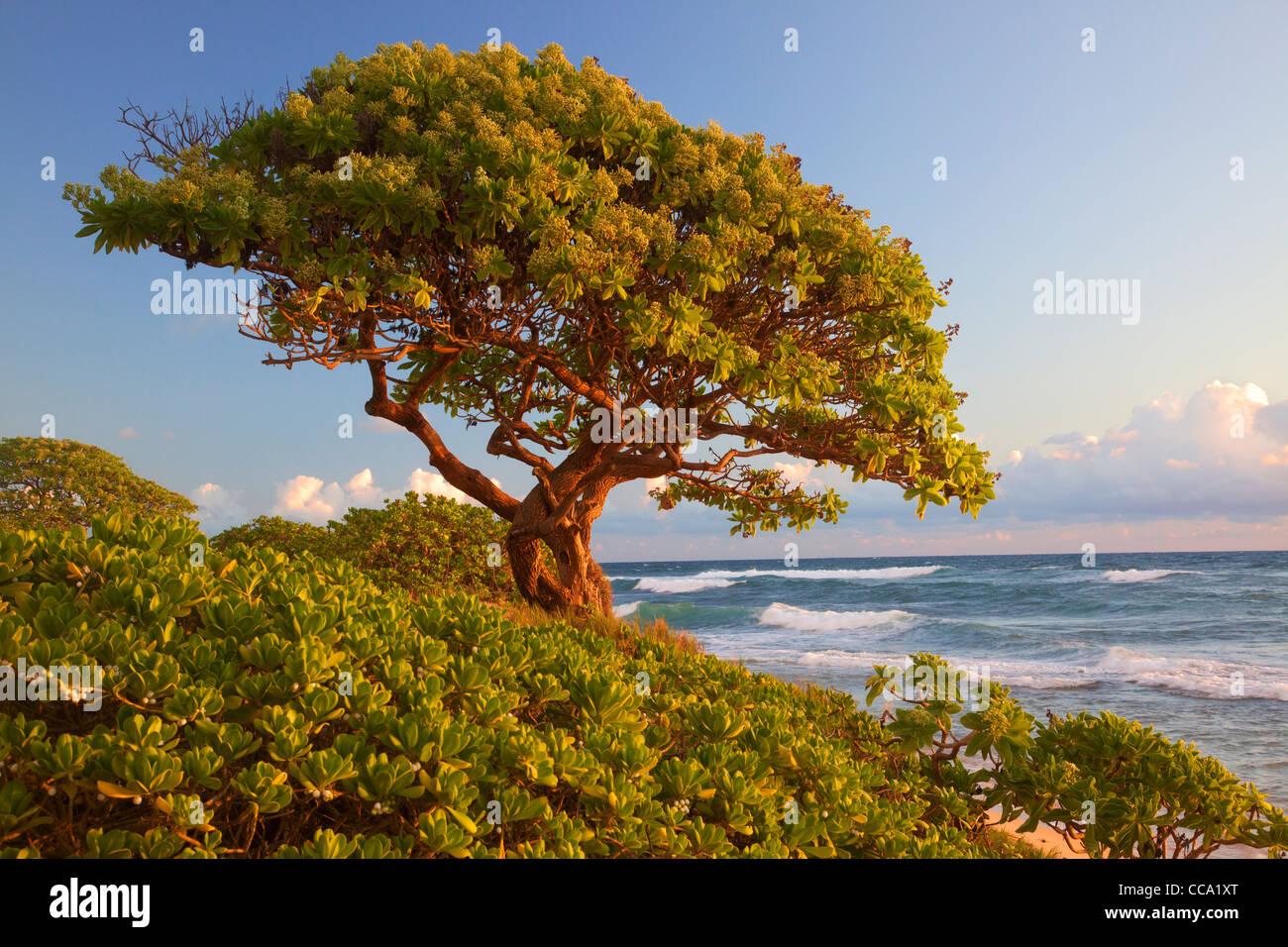 Nukoli'i Strand, auch bekannt als Küchen, Kauai, Hawaii. Stockbild