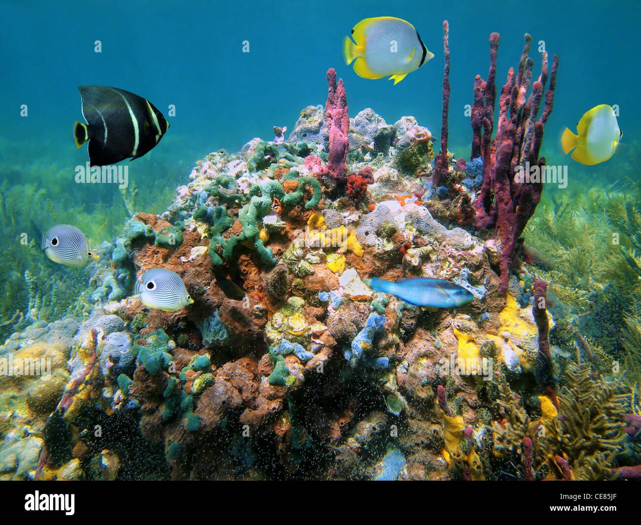 Bunte Unterwasserwelt mit Schwämmen und tropische Fische unter Wasser Meer, Caribbean Stockbild