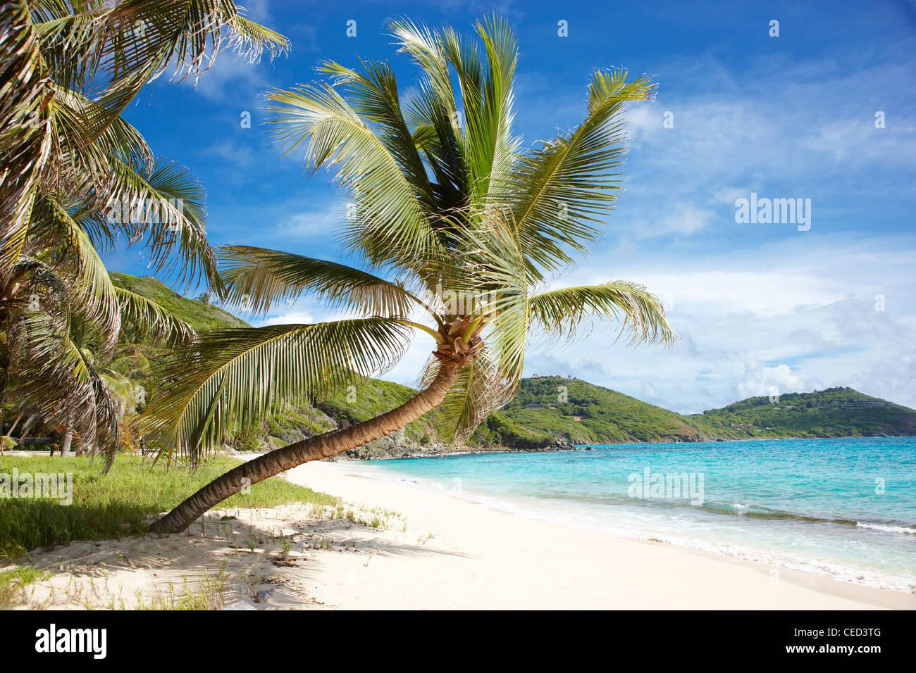 leere tropischen Strand Palme Stockbild