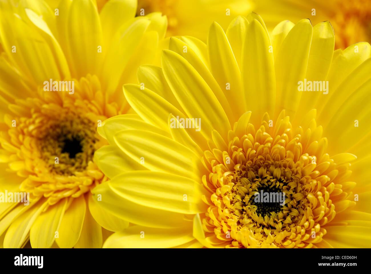 Gelbe Blumen Hintergrund Stockbild