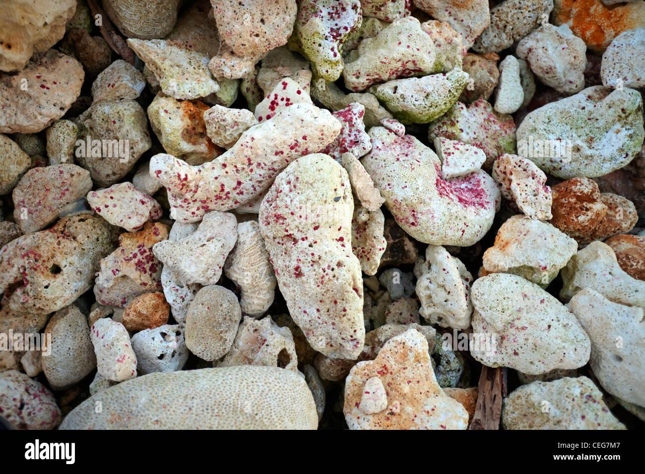 Stillleben-Schuss von farbenprächtigen Korallen am Strand Stockbild