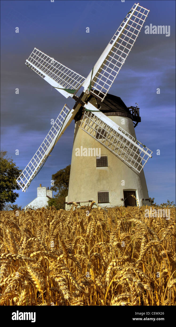 Laden Sie dieses Alamy Stockfoto Feld- und Llynnon Windmühle, Anglesea, Ernte Ynys Mon, Wales Cymru Gymru zeigt UK Sommergerste im Feld. - CEMX26