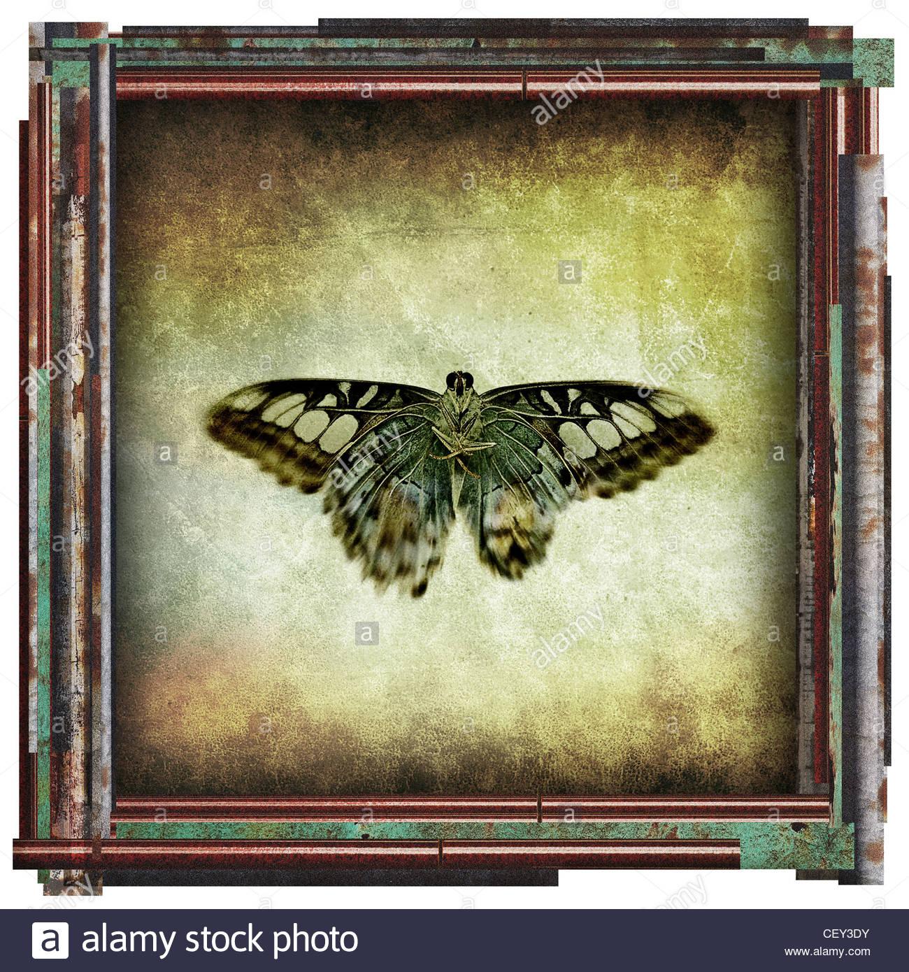 Schmetterling-Bild Stockbild