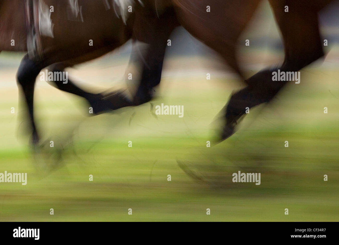 Bewegung der Rennpferde in vollem Galopp verwischt. Stockbild