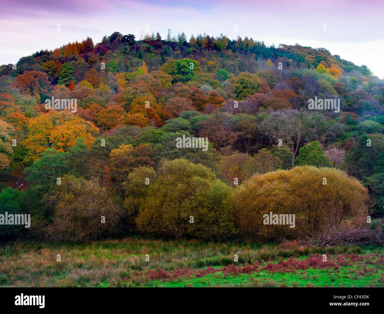 Eine bunte herbstliche Anzeige von Bäumen auf Beddugre Hügel. Stockbild