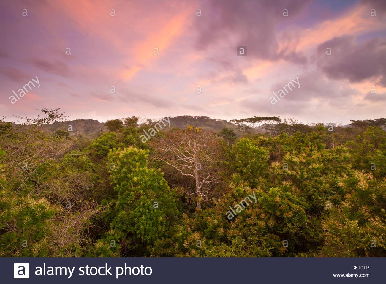 Morgendämmerung im Regenwald von Soberania Nationalpark, Republik von Panama. Stockbild