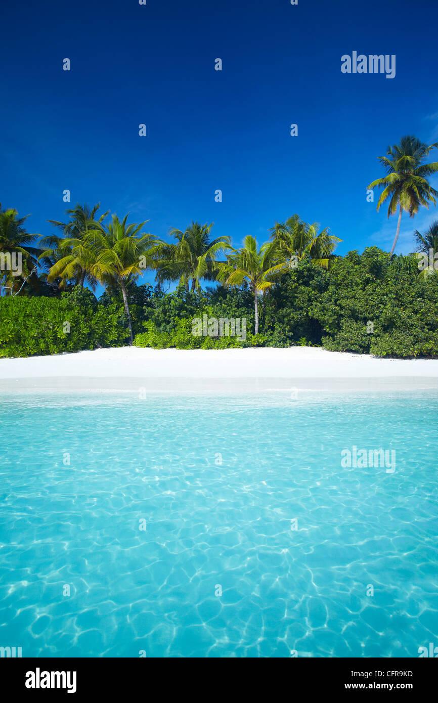 Tropischer Strand, Malediven, Indischer Ozean, Asien Stockbild