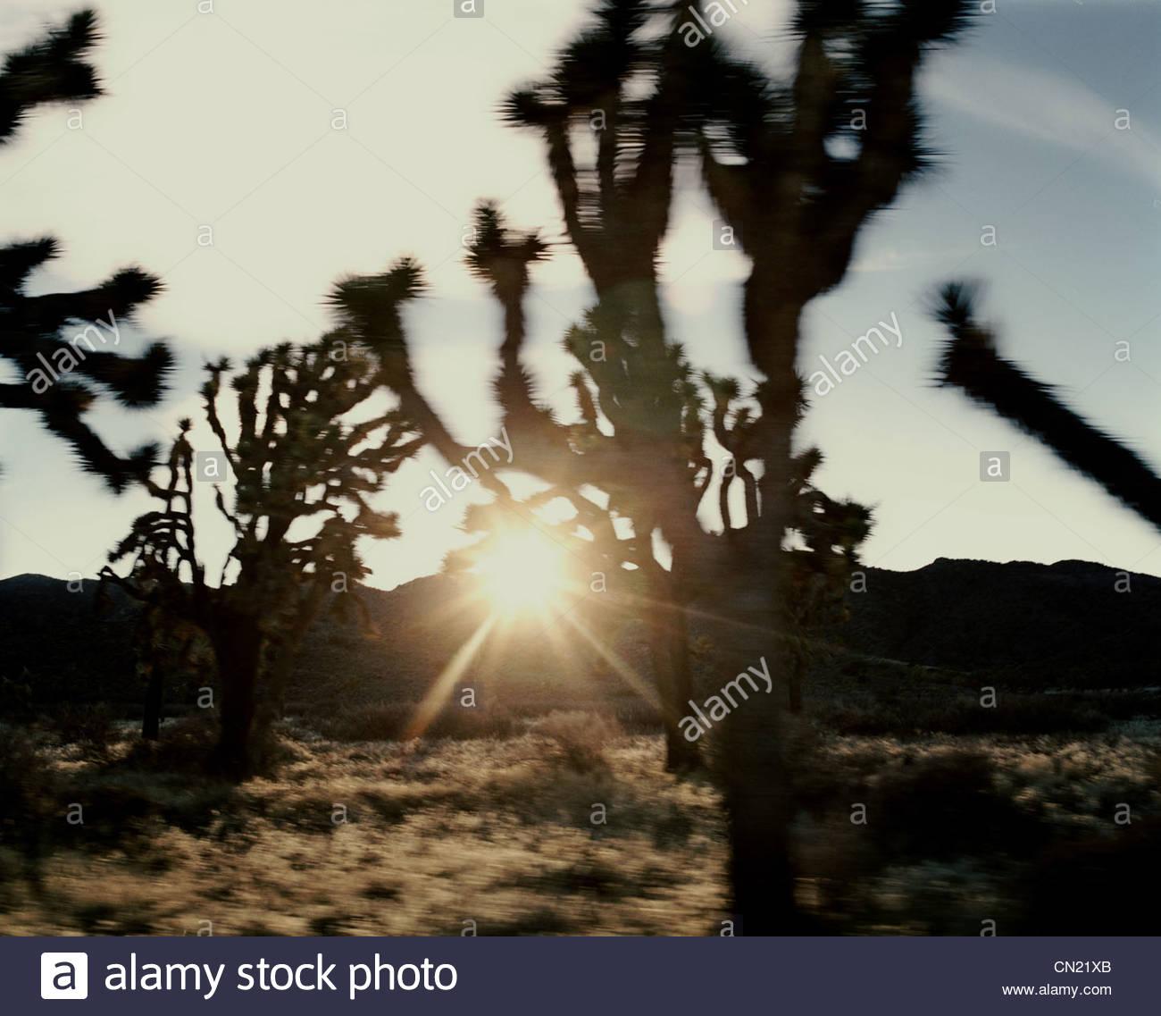 Verschwommen landschaftlich, Joshua Tree, Kalifornien, USA Stockbild