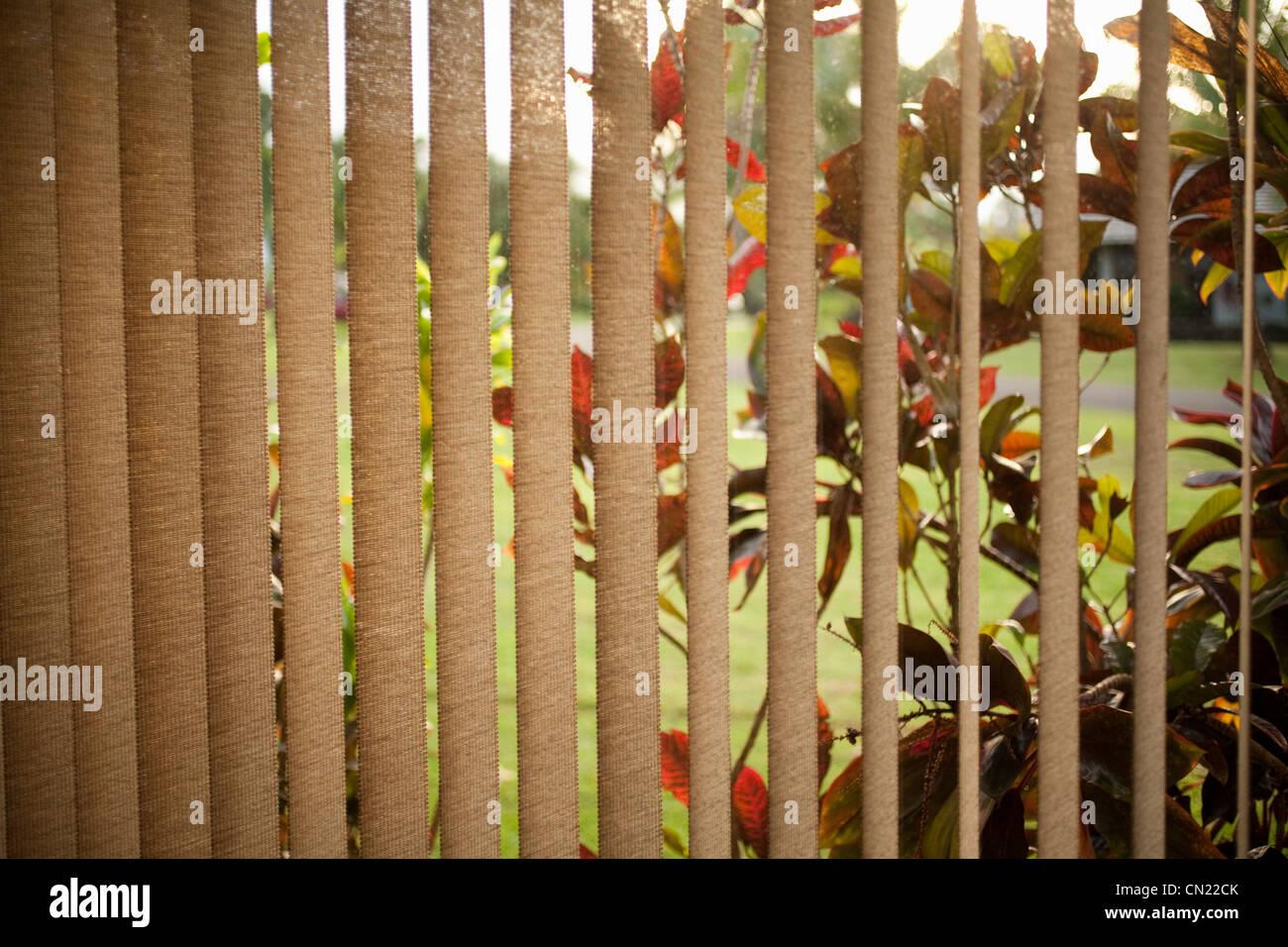 Fenster-Vorhänge und Büsche Stockbild