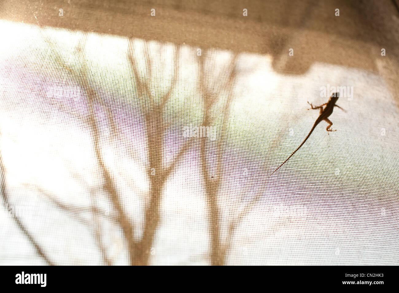 Eidechse auf Fenster-Bildschirm Stockbild