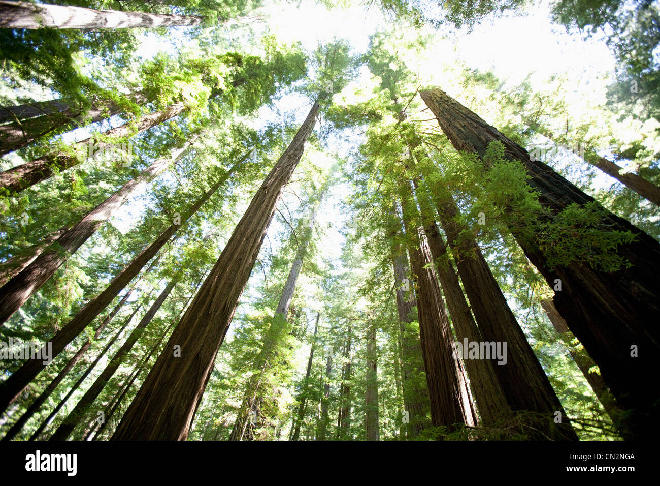 Bäume im Wald, niedrigen Winkel Ansicht Stockbild