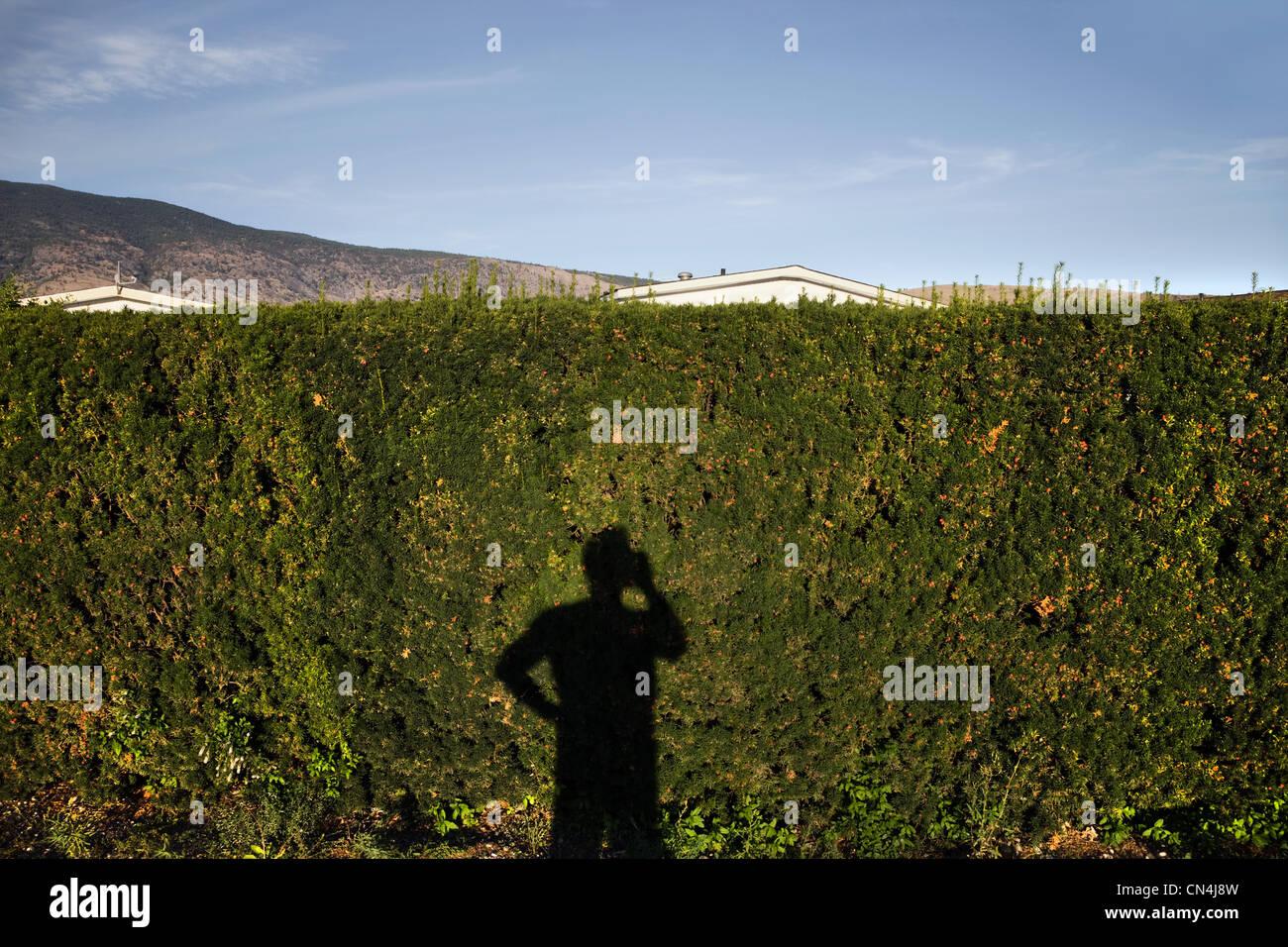 Schatten des Mannes mit Handy auf Hecke Stockbild