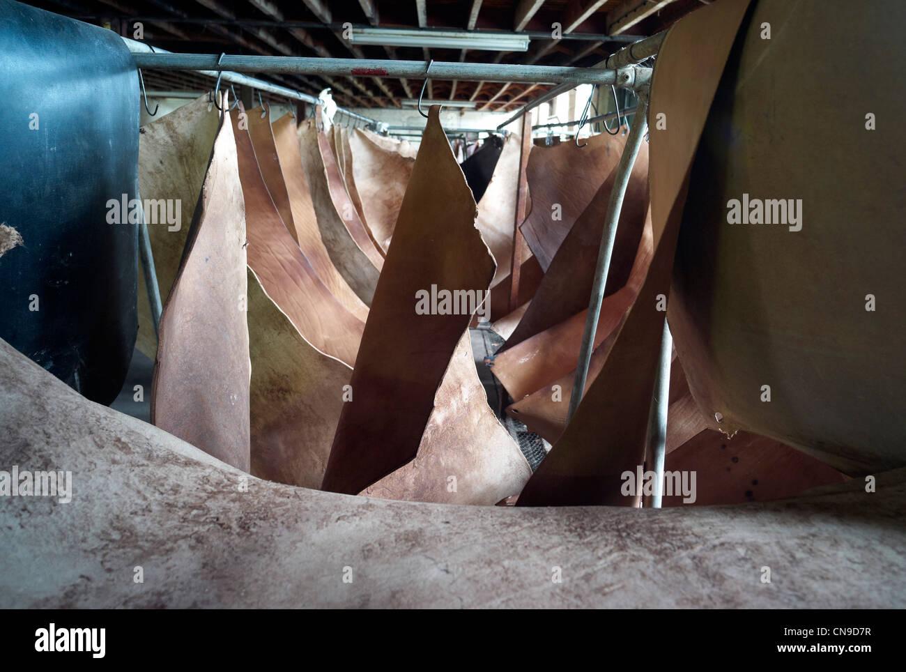 Kuh versteckt hängen an Bäcker traditionellen Oak Bark Gerberei Colyton Devon England Stockbild