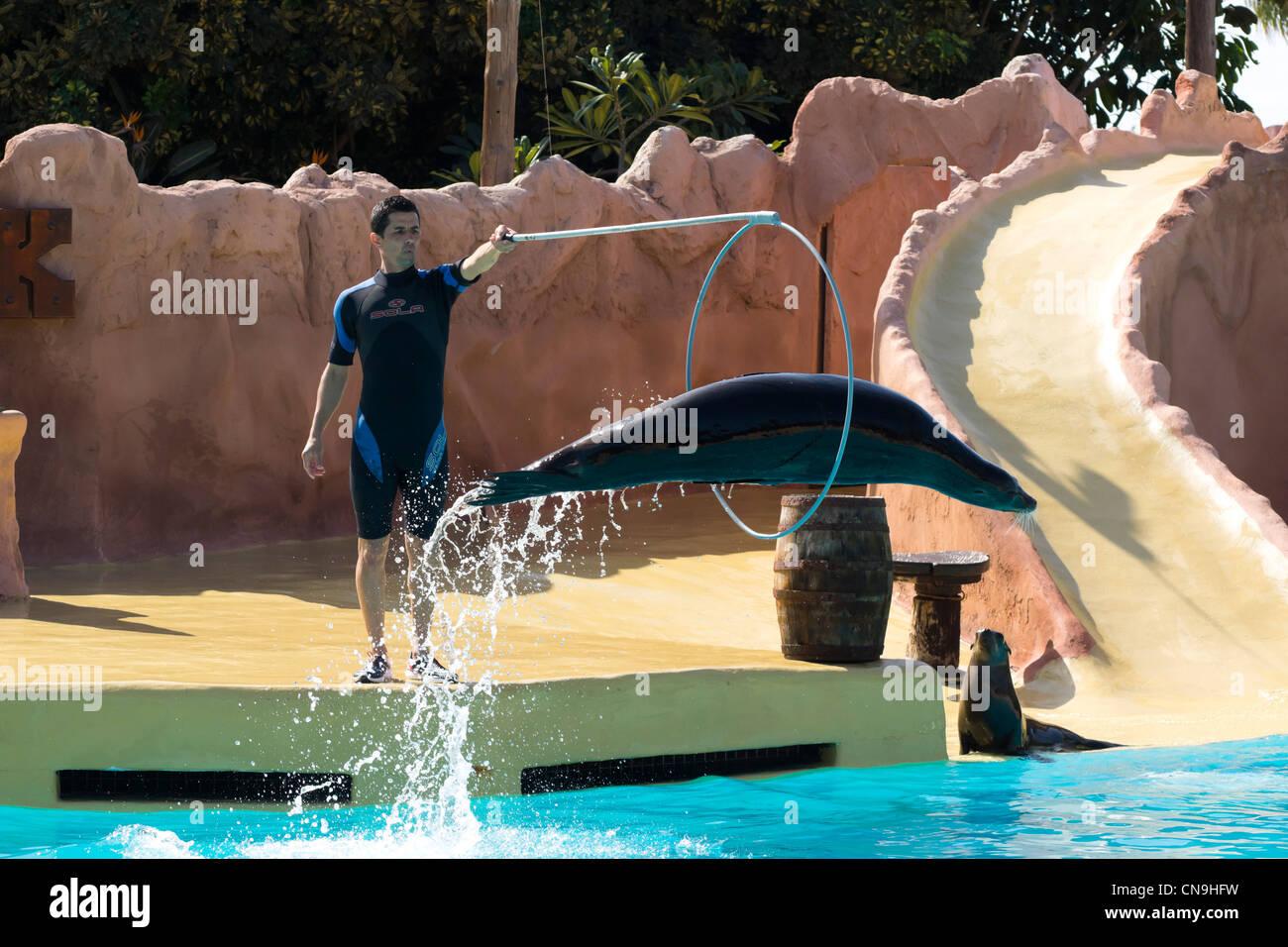 Lanzarote, Kanarische Inseln - Rancho Texas, Freizeitpark und Zoo. Kalifornien Seelöwe Show. Stockbild