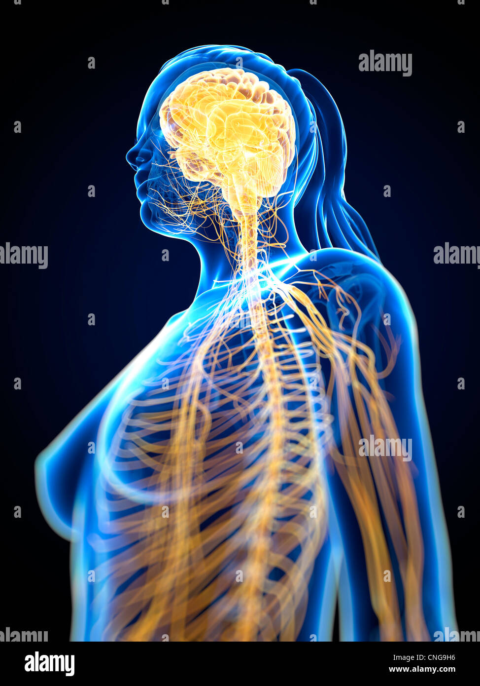 Nervensystem-Kunstwerk Stockbild