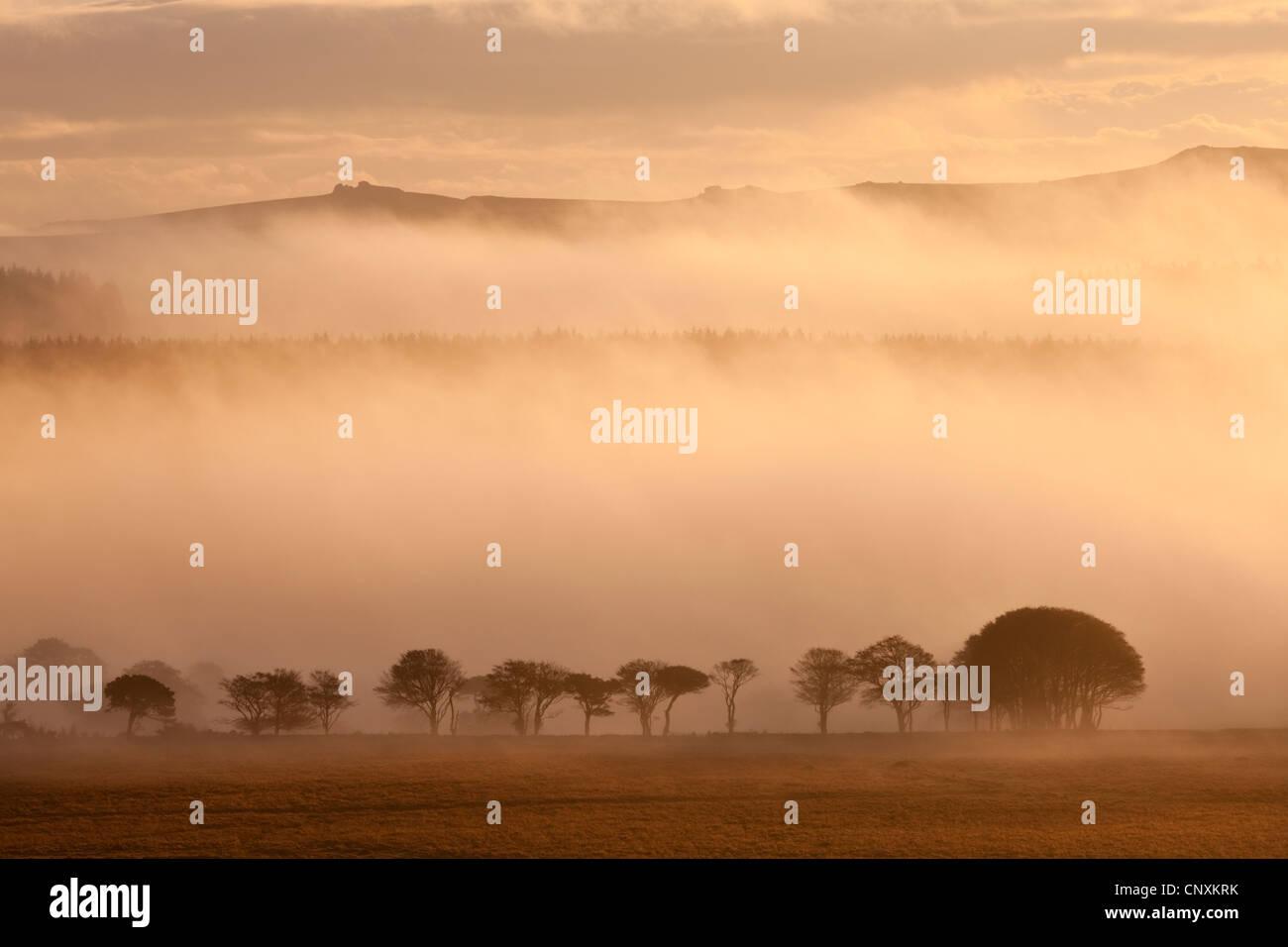 Nebel bedeckten Moor bei Sonnenaufgang, in der Nähe von Farbwerken, Dartmoor, Devon, England. Herbst (Oktober) Stockbild