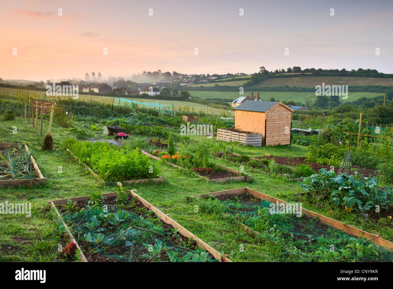 Hochbeete auf einem ländlichen Zuteilung Grundstück am Rande des mittleren Devon Dorf der Morchard Bischof, Stockbild