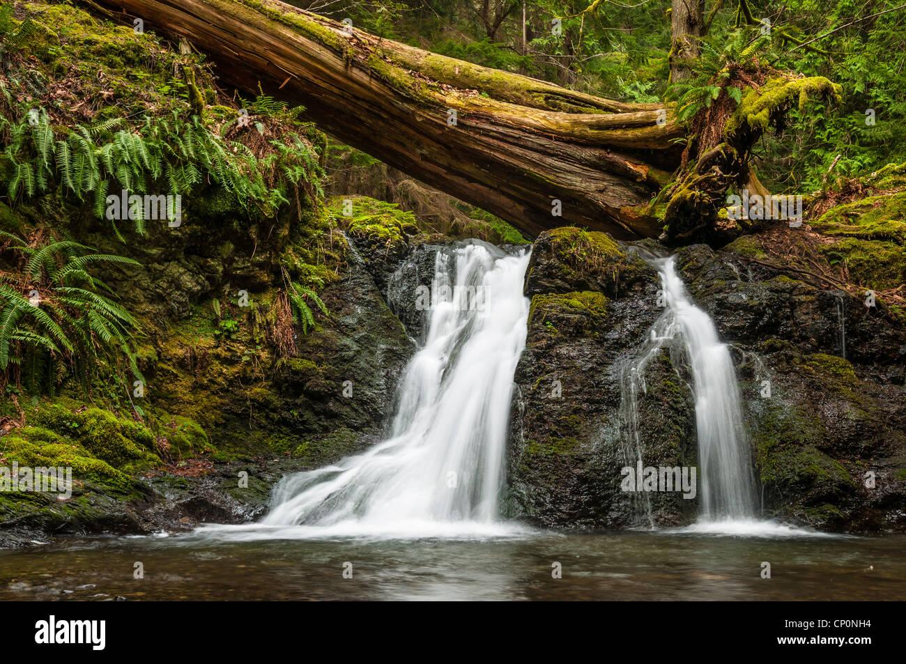 Rustikal-Fälle, Moran Staatspark, Orcas Island; San Juan Islands, Washington. Stockbild