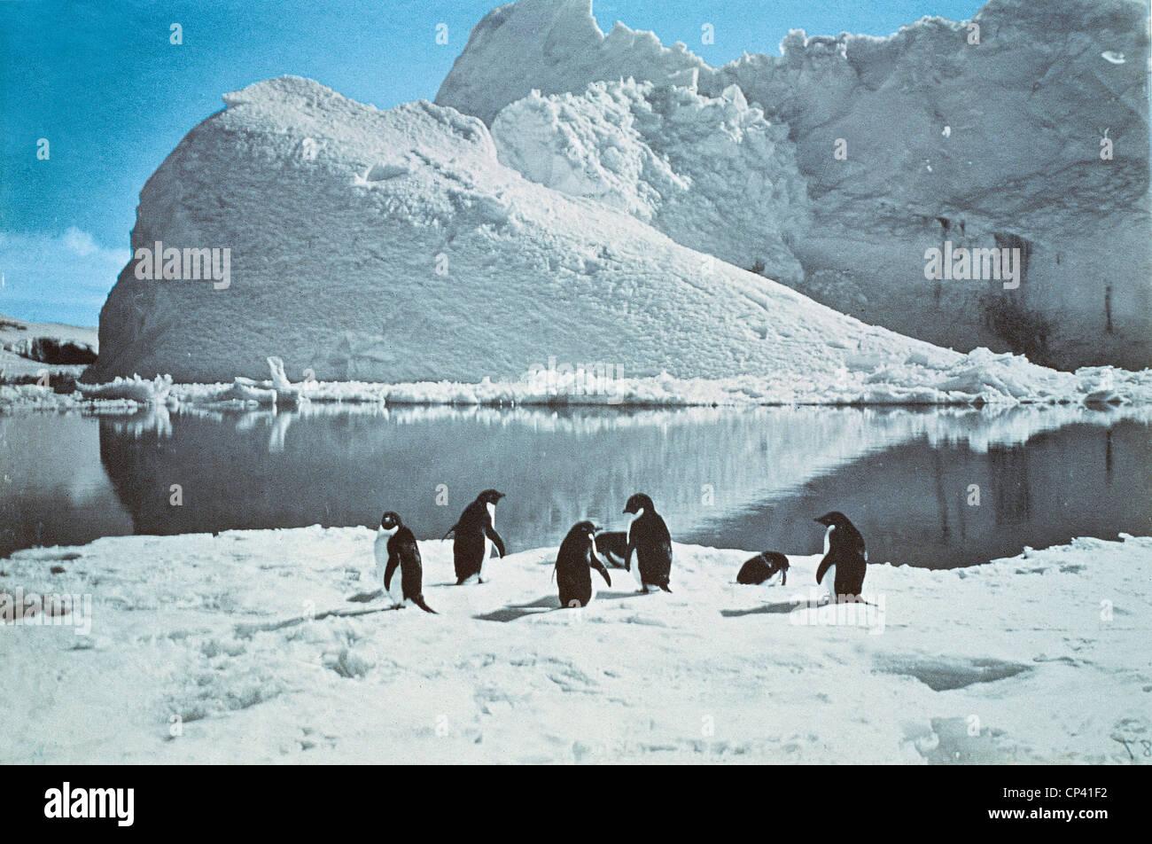 Geschichte der Erforschung der Antarktis, des 20. Jahrhunderts. Pinguni Bucht fotografiert von Expedition von Robert Stockbild