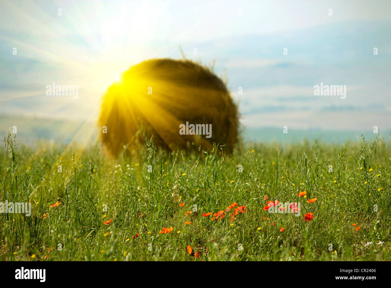 Sonne über Haybale im Weizenfeld Stockbild