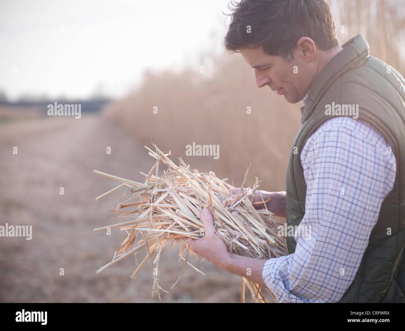 Landwirt Holding Haufen von Elefantengras Stockbild