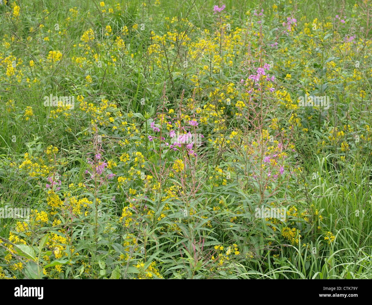 wildblumenwiese stockfotos wildblumenwiese bilder alamy. Black Bedroom Furniture Sets. Home Design Ideas